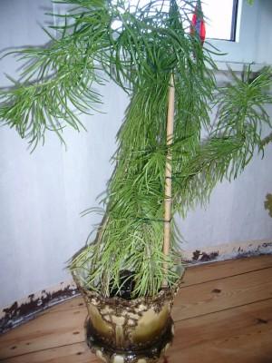 Name:  t_pflanze_128-1.jpeg Views: 1782 Size:  45.5 KB