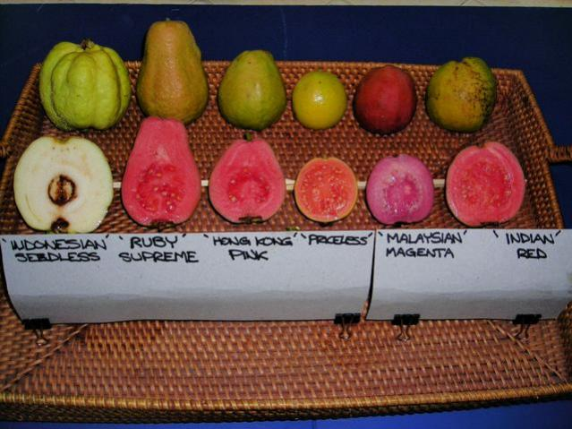 Name:  guavas.jpg