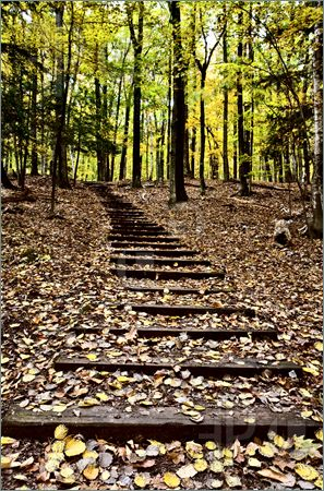 Name:  Wooden-Stairs-1770302.jpg