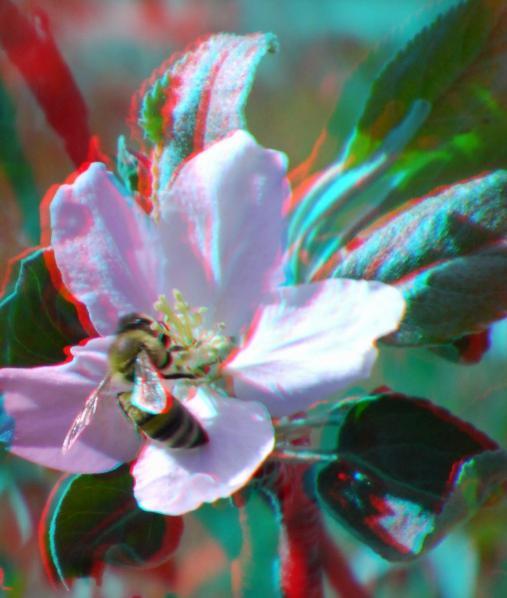 Name:  arı.jpg Views: 4008 Size:  37.7 KB