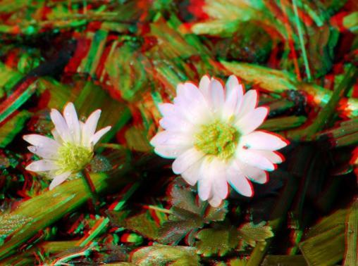 Name:  çiçek.jpg Views: 6789 Size:  37.0 KB