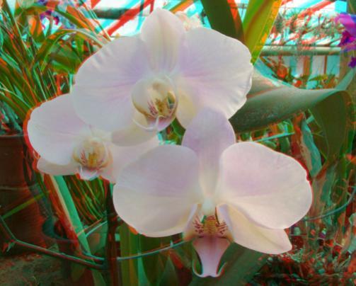 Name:  imre_botanic0004.jpg Views: 3610 Size:  32.2 KB