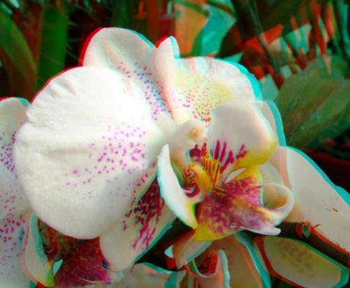 Name:  imre_botanic0006.jpg Views: 3574 Size:  29.8 KB