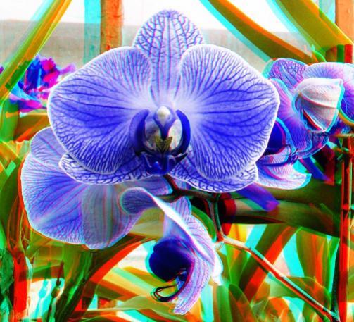 Name:  imre_botanic0008.jpg Views: 3745 Size:  55.1 KB