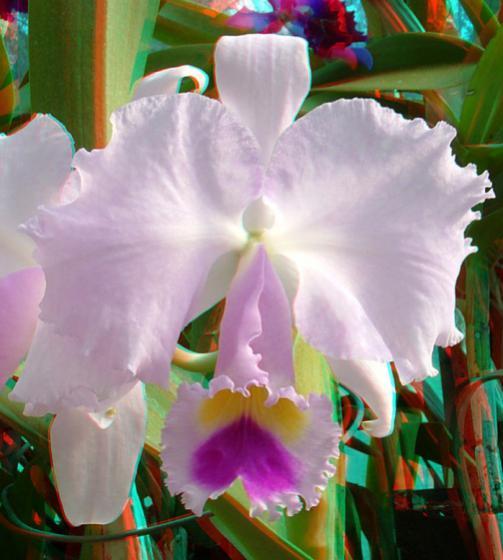 Name:  imre_botanic0011.jpg Views: 3578 Size:  38.1 KB