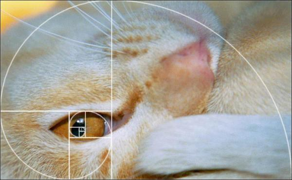 Name:  Croppedcat-overlay.jpg Views: 11290 Size:  32.8 KB