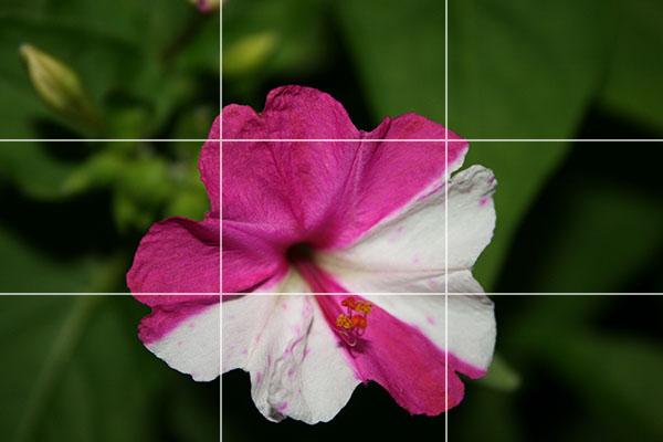 Name:  cicek_1_b.jpg Views: 10704 Size:  55.1 KB