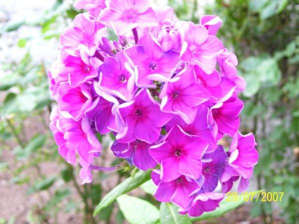 Name:  çiçek.jpg Views: 515 Size:  46.0 KB