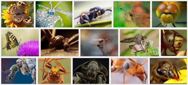 Name:  böcek yakın çekimler makrolar.jpg Views: 447 Size:  44.1 KB