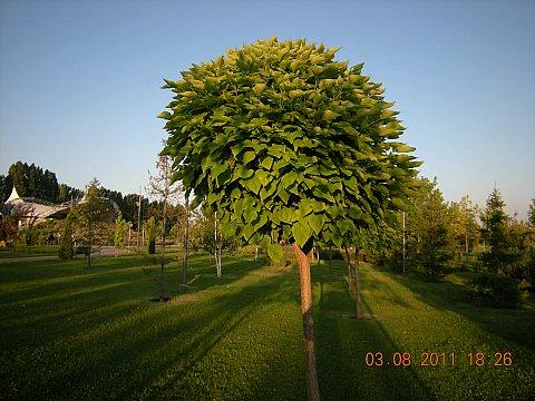 Name:  DSCN5186.jpg Views: 14752 Size:  51.4 KB