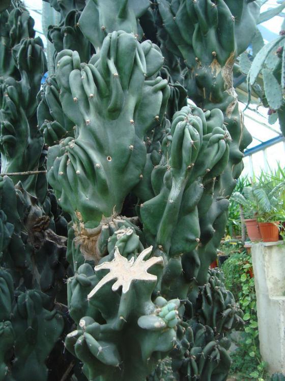 Name:  İ- Ü Botanik bahçesi 47.jpg Views: 3156 Size:  74.4 KB