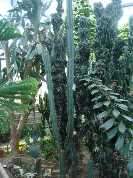 Name:  İ- Ü Botanik bahçesi 48.jpg Views: 2684 Size:  76.5 KB
