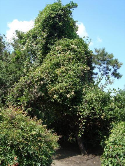 Name:  İ- Ü Botanik bahçesi 47.jpg Views: 3238 Size:  73.6 KB