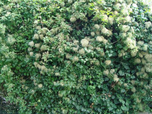 Name:  İ- Ü Botanik bahçesi 48.jpg Views: 2962 Size:  72.2 KB