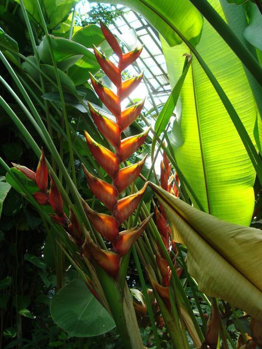 Name:  İ- Ü Botanik bahçesi 54.jpg Views: 2513 Size:  75.4 KB