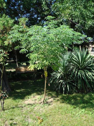 Name:  İ- Ü Botanik bahçesi 58.jpg Views: 2531 Size:  73.7 KB