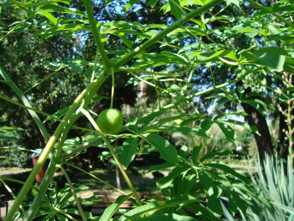 Name:  İ- Ü Botanik bahçesi 60.jpg Views: 2668 Size:  73.1 KB