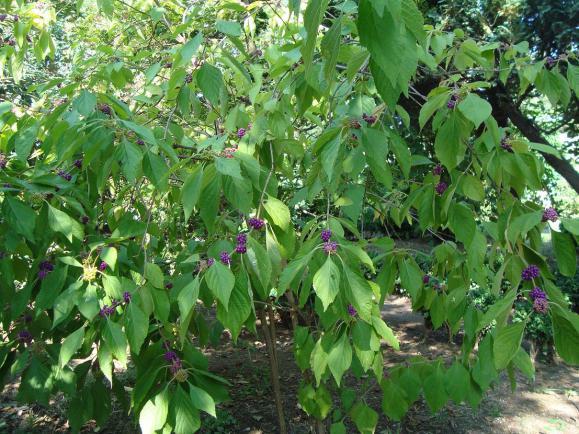Name:  İ- Ü Botanik bahçesi 62.jpg Views: 2875 Size:  72.3 KB