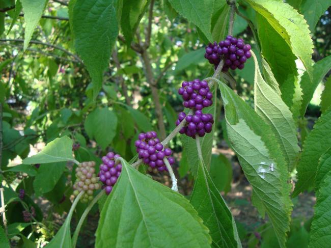 Name:  İ- Ü Botanik bahçesi 63.jpg Views: 2942 Size:  57.4 KB
