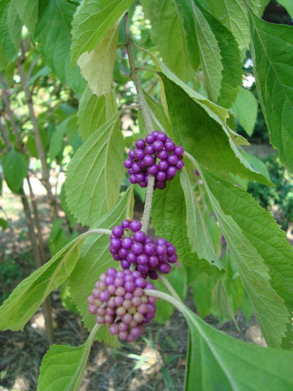 Name:  İ- Ü Botanik bahçesi 64.jpg Views: 3266 Size:  72.3 KB