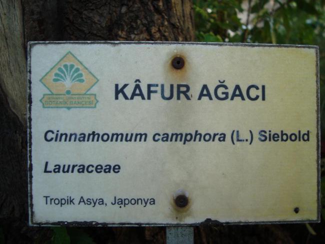 Name:  İ- Ü Botanik bahçesi 65.jpg Views: 2566 Size:  38.4 KB
