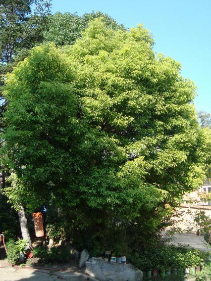 Name:  İ- Ü Botanik bahçesi 69.jpg Views: 2971 Size:  73.2 KB