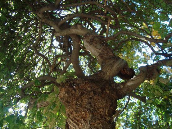 Name:  İ- Ü Botanik bahçesi 73.jpg Views: 2443 Size:  73.8 KB