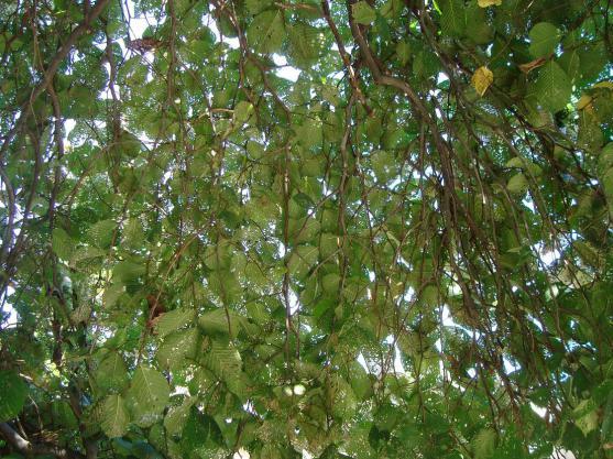 Name:  İ- Ü Botanik bahçesi 74.jpg Views: 2398 Size:  71.3 KB