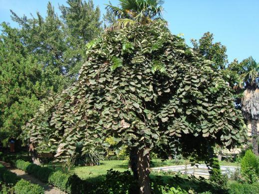 Name:  İ- Ü Botanik bahçesi 75.jpg Views: 2616 Size:  72.0 KB