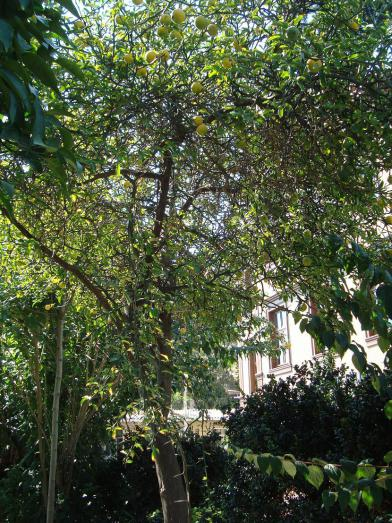 Name:  İ- Ü Botanik bahçesi 77.jpg Views: 2445 Size:  74.3 KB