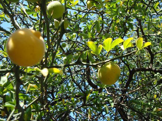 Name:  İ- Ü Botanik bahçesi 79.jpg Views: 2152 Size:  75.7 KB