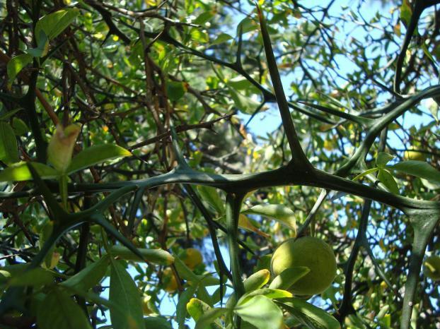 Name:  İ- Ü Botanik bahçesi 80.jpg Views: 2326 Size:  71.5 KB