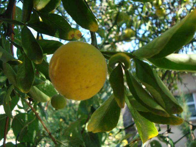 Name:  İ- Ü Botanik bahçesi 81.jpg Views: 2642 Size:  48.5 KB
