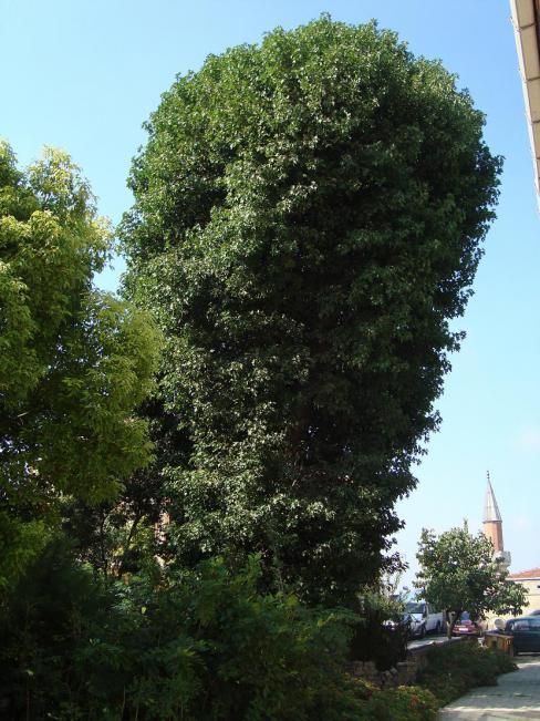 Name:  İ- Ü Botanik bahçesi 84.jpg Views: 2794 Size:  71.9 KB