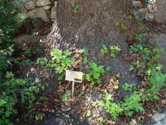 Name:  İ- Ü Botanik bahçesi 85.jpg Views: 2952 Size:  71.9 KB