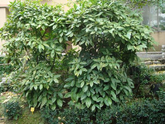 Name:  İ- Ü Botanik bahçesi 317.jpg Views: 1102 Size:  71.9 KB