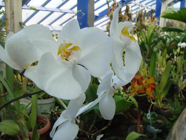 Name:  İ- Ü Botanik bahçesi 322.jpg Views: 1004 Size:  47.0 KB