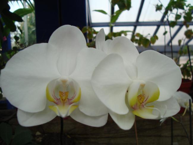Name:  İ- Ü Botanik bahçesi 323.jpg Views: 994 Size:  29.8 KB