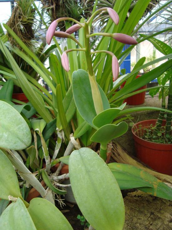Name:  İ- Ü Botanik bahçesi 327.jpg Views: 974 Size:  74.1 KB