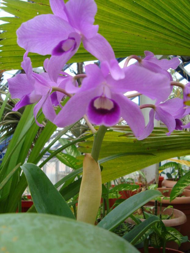 Name:  İ- Ü Botanik bahçesi 331.jpg Views: 995 Size:  71.0 KB
