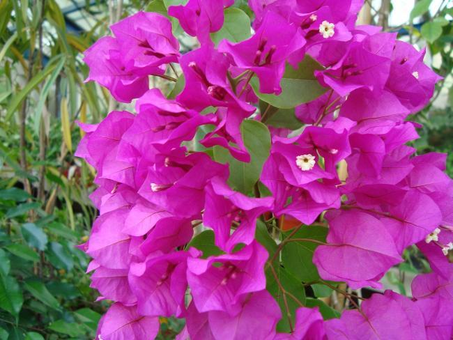 Name:  İ.Ü Botanik Bahçesi 1109.jpg Views: 1127 Size:  56.9 KB