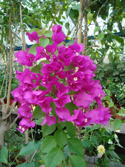 Name:  İ.Ü Botanik Bahçesi 1110.jpg Views: 1019 Size:  78.8 KB
