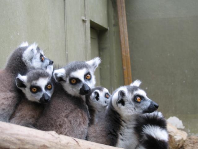 Darıca Boğaziçi Hayvanat Bahçesi