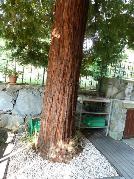 Name:  Bahçe 29 haziran 2010 003.JPG Views: 8837 Size:  55.4 KB
