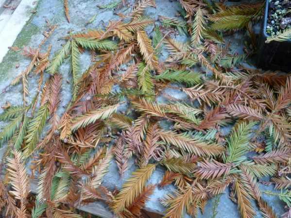 Name:  Bahçe 01 Ağustos 2010 043.jpg Views: 7770 Size:  69.2 KB