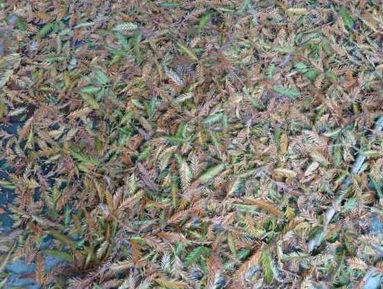 Name:  Bahçe 01 Ağustos 2010 046.JPG Views: 9299 Size:  68.5 KB