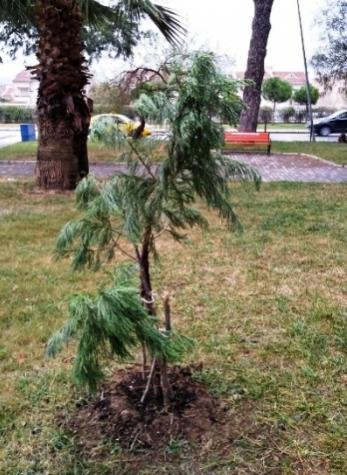 Name:  sequoiagaziemir1.jpg Views: 42 Size:  40.8 KB
