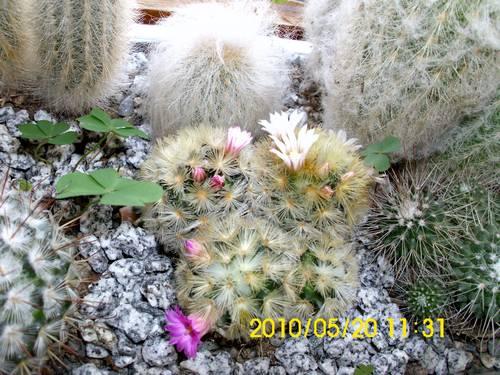 Name:  kaktus.jpg Views: 2533 Size:  51.2 KB