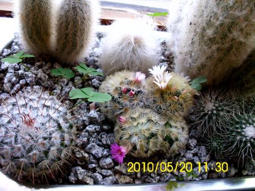 Name:  kaktus2.jpg Views: 2522 Size:  46.8 KB