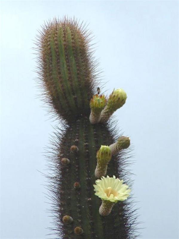 Name:  xpacherocactus (600 x 800).jpg Views: 134757 Size:  40.4 KB